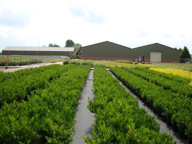 Planten groothandel