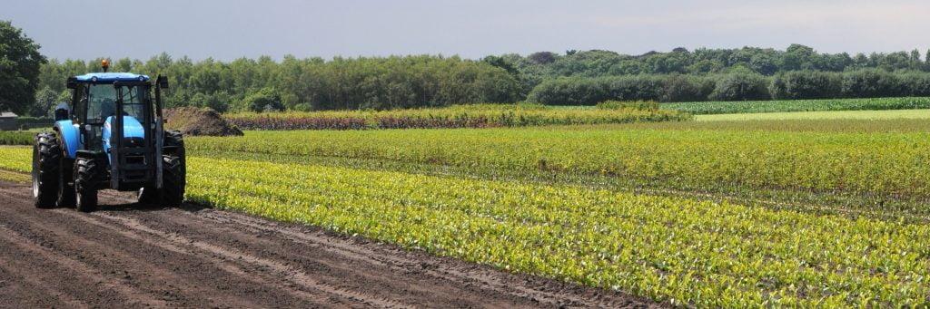 Aanplanting groenvoorzieningen