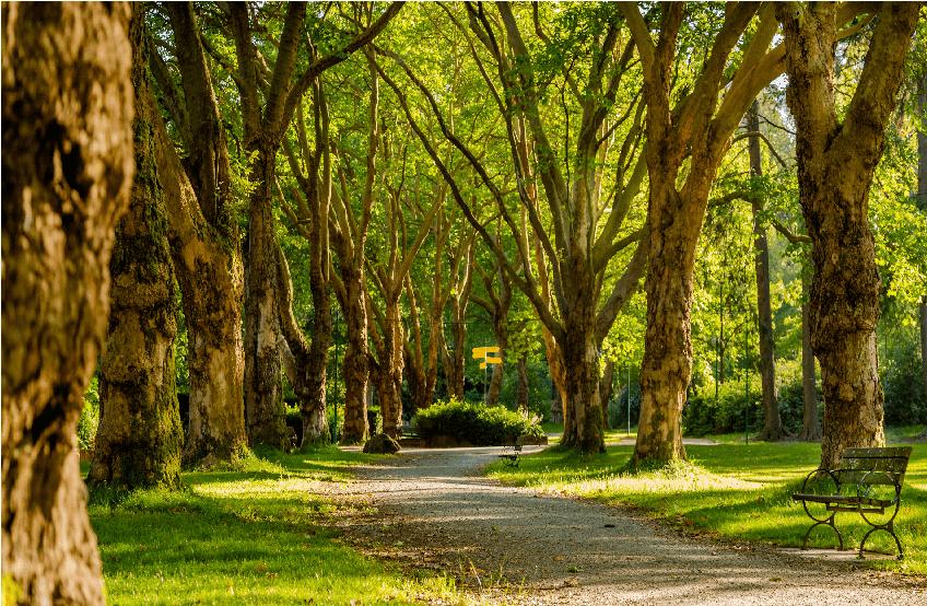 Parkbomen